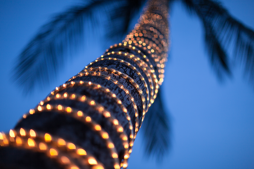a palm tree wrapped with lights