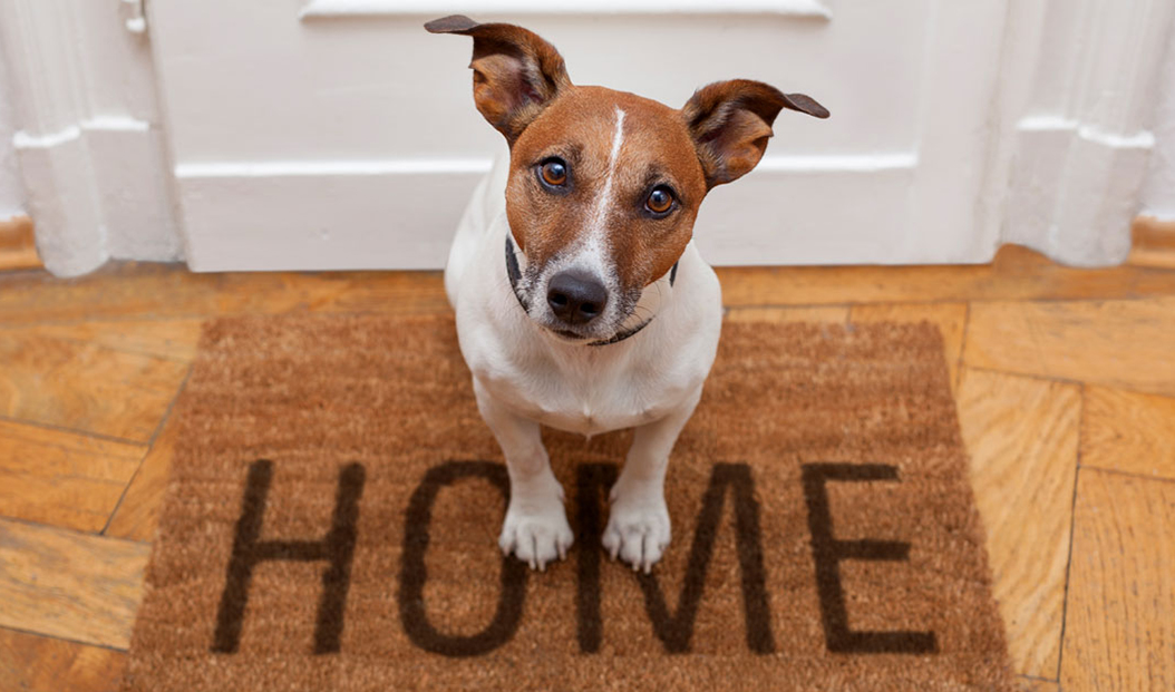 """a dog sits on a door mat that says: """"home"""""""