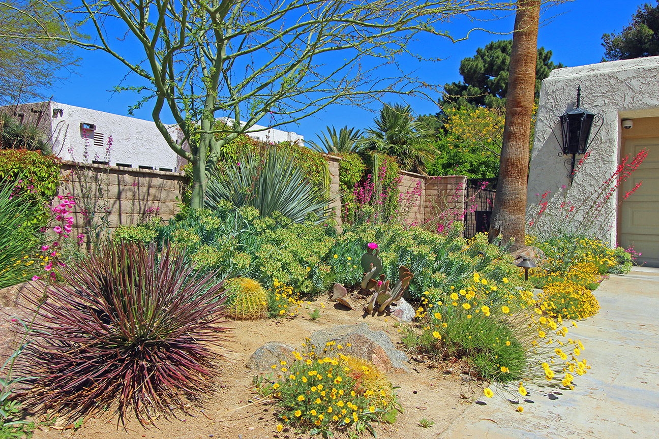 creating your desert oasis finding plants that dig southern nevada