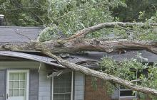 tree branch through house roof